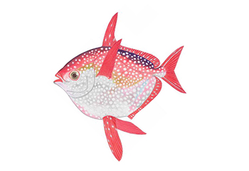 Illustration of Opah